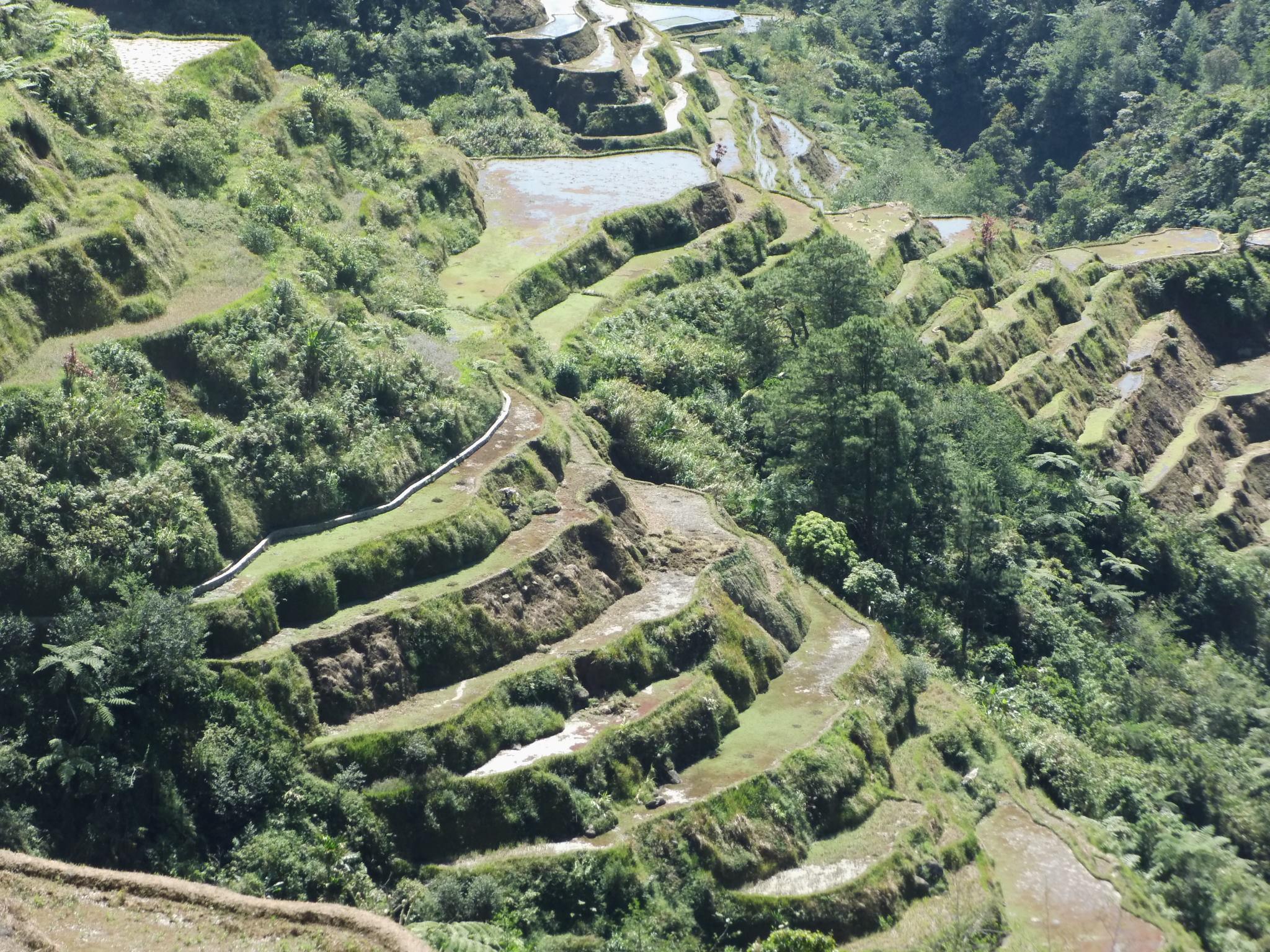 Reisterrassen in Banaue