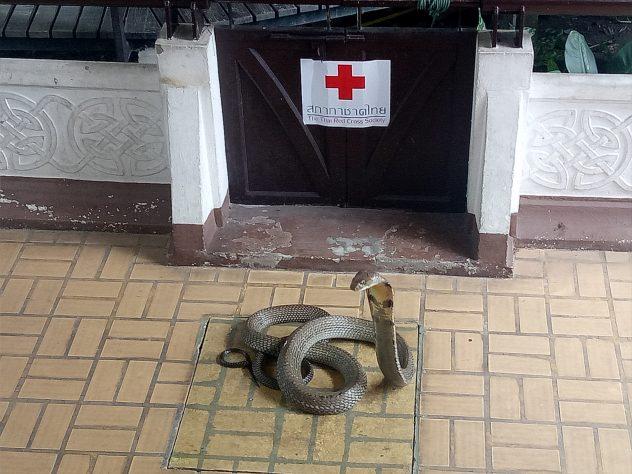 Schlangenfarm Bangkok