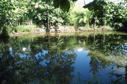 Sahai Nan Farm, der Teich